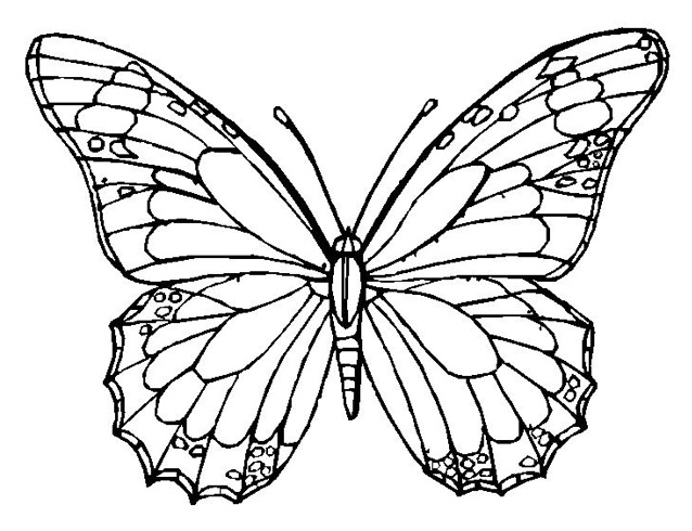 Butterfly Coloring Pages Pdf : Coloring pages for adults pdf free download