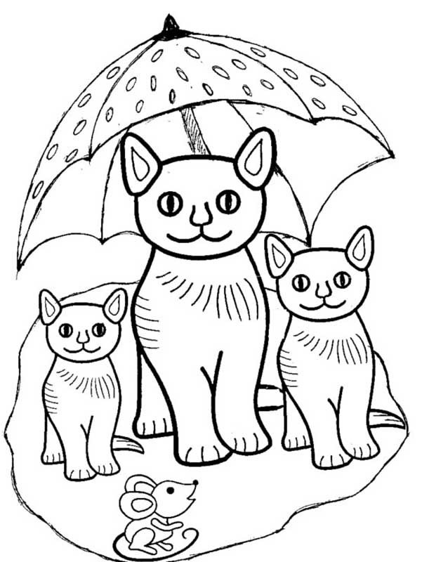 cat and kitten coloring pages