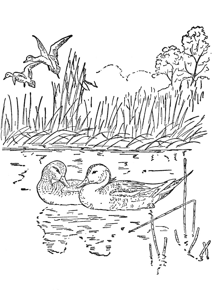 Nature Coloring Pages For Adult