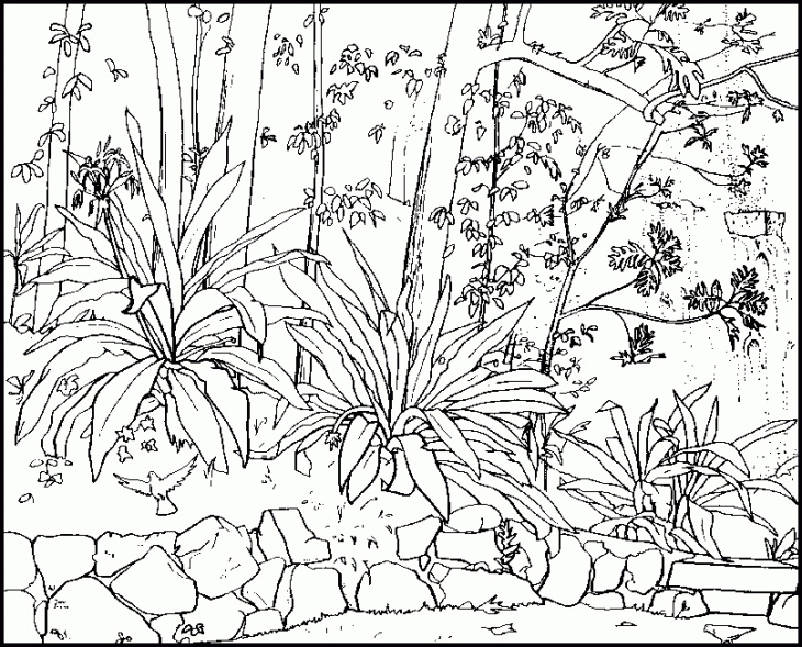 Nature Coloring Pages For Adults 2