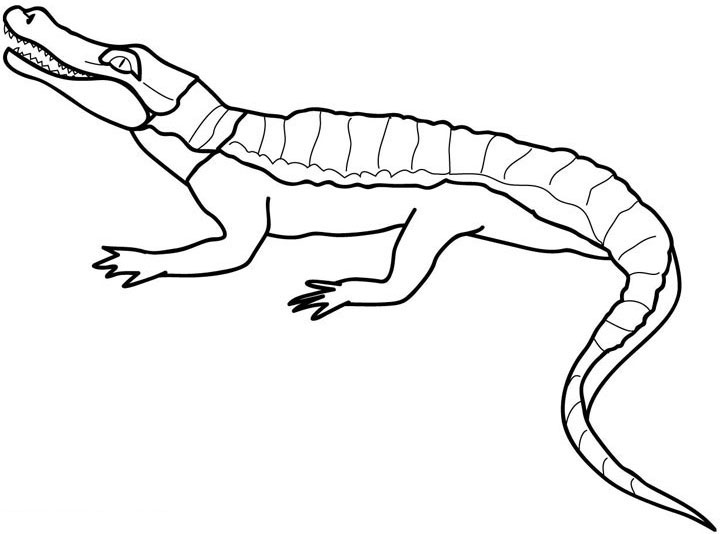 Crocodile Coloring Pages Free