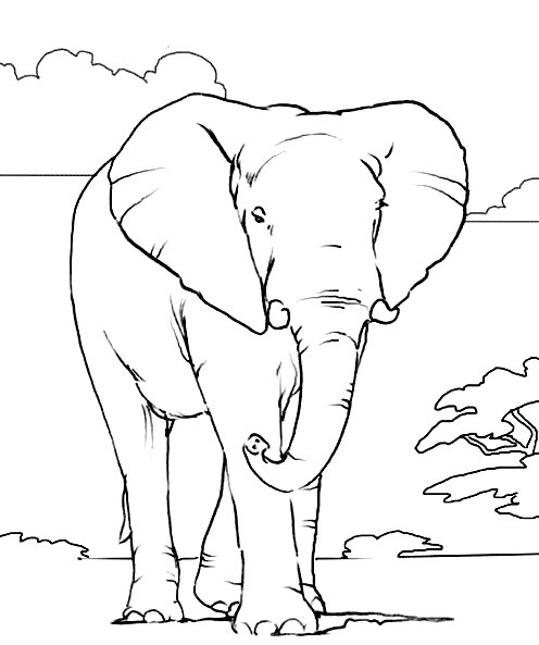 Elephant Coloring Pages Free Download