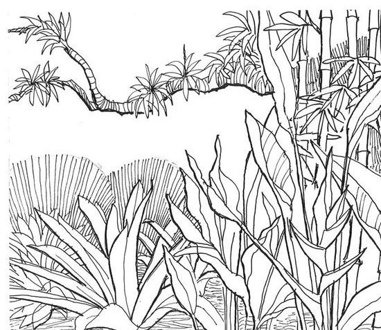 jungle background coloring pages - photo#13