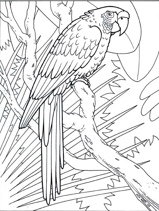 jungle background coloring pages - photo#35