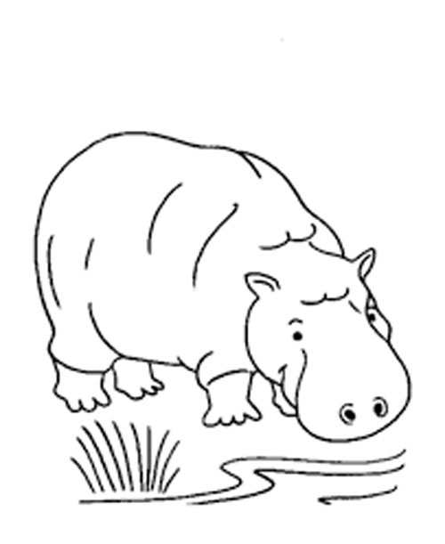 Hippo Coloring Pages Free Download