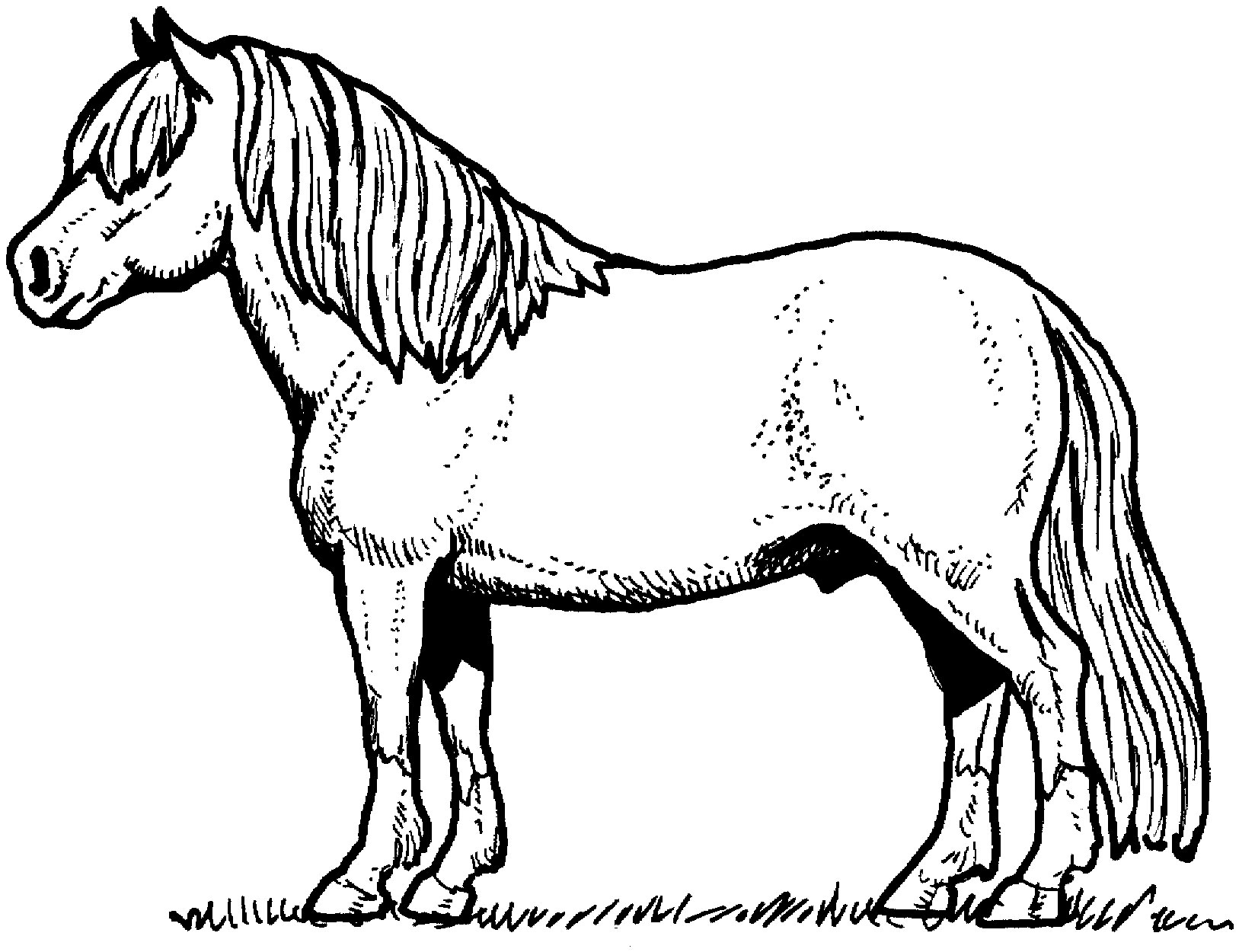 nicoles horse coloring pages - photo#34