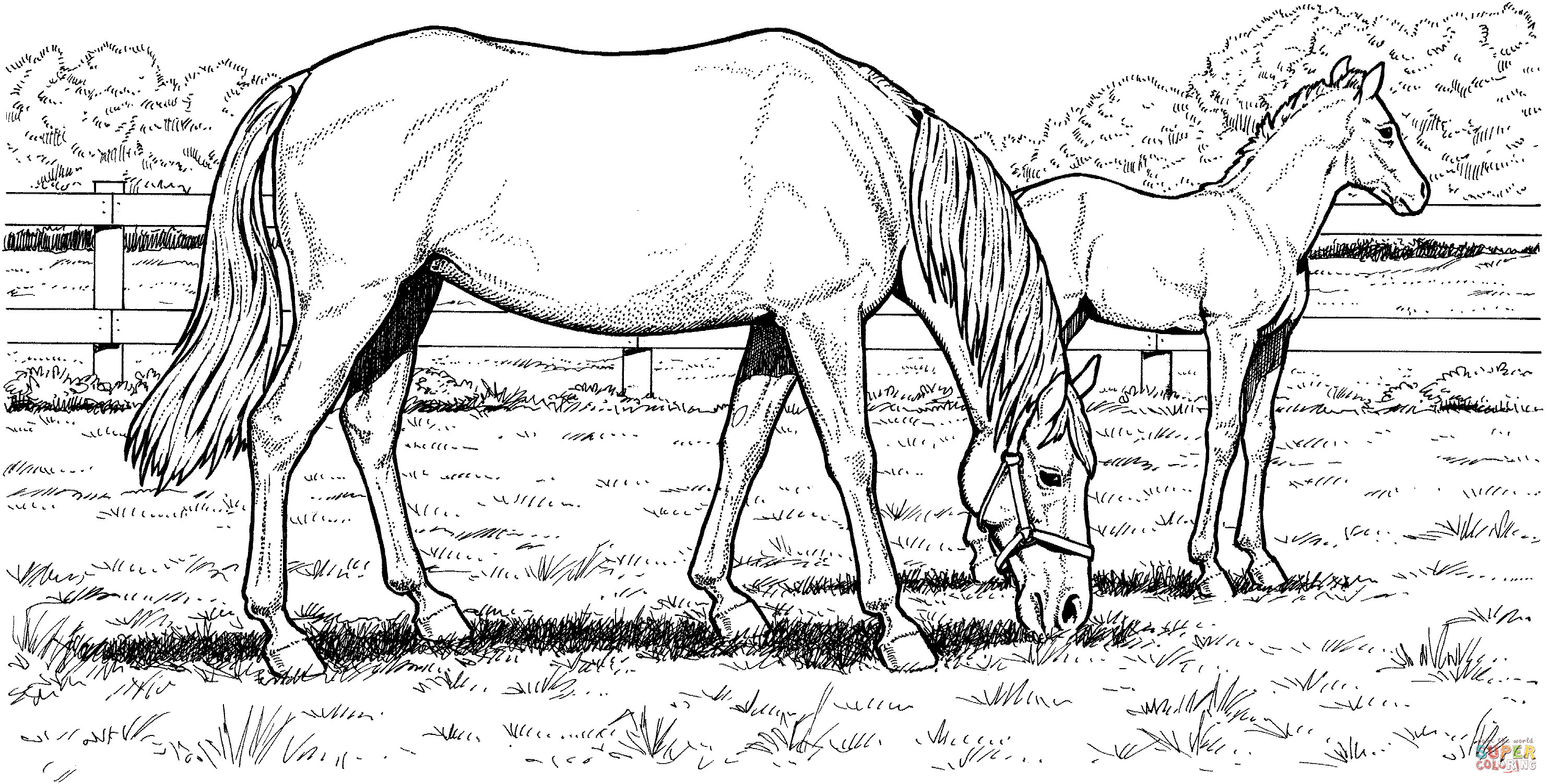 Advanced Coloring Pages Of Horses : Free horse coloring pages for download
