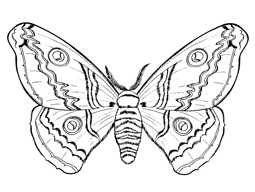 insect coloring pages free - Insect Coloring Pages