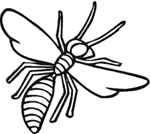 Insect Coloring Pages Free