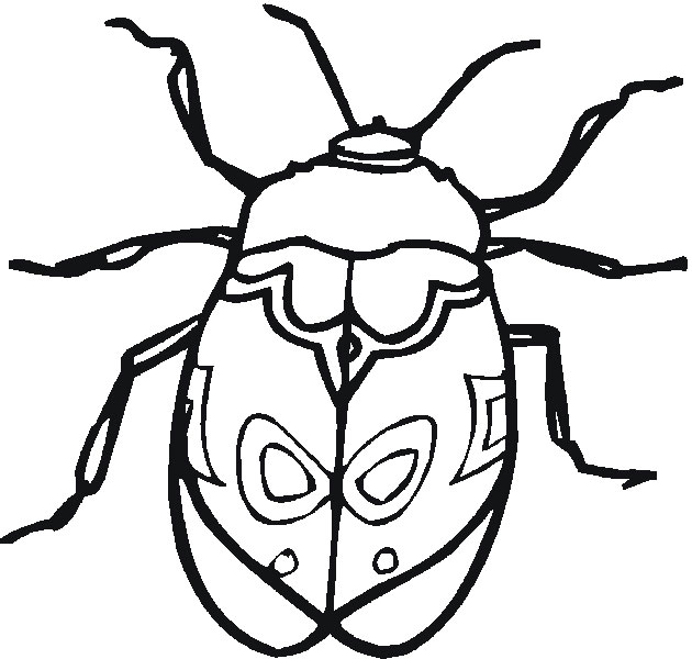 Insect Coloring Pages