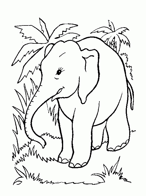 Jungle Coloring Pages For Preschoolers