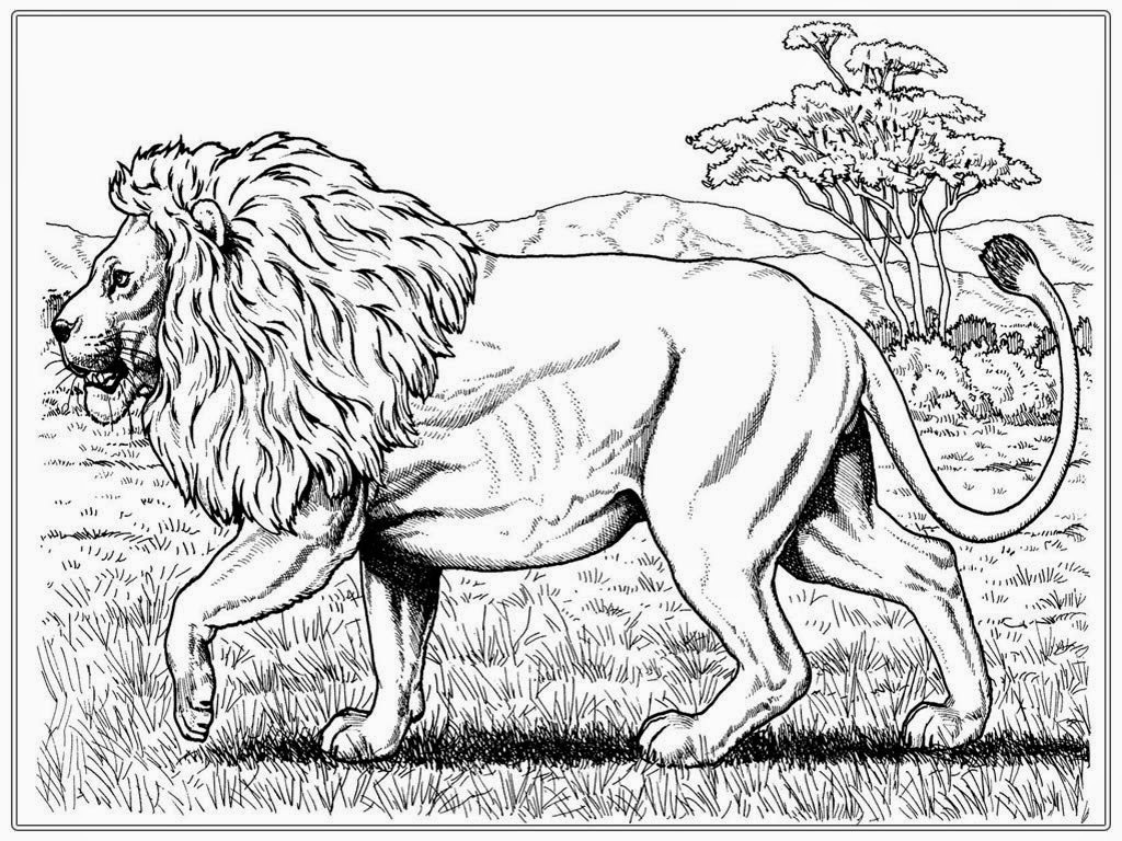 Coloring Pages For Adults Lion Coloring Pages