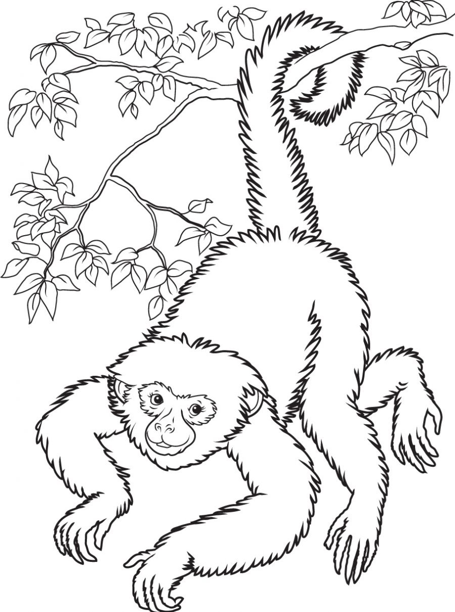 Monkey Coloring Pages For Adults