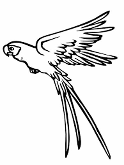Parrot Coloring Pages Free Download