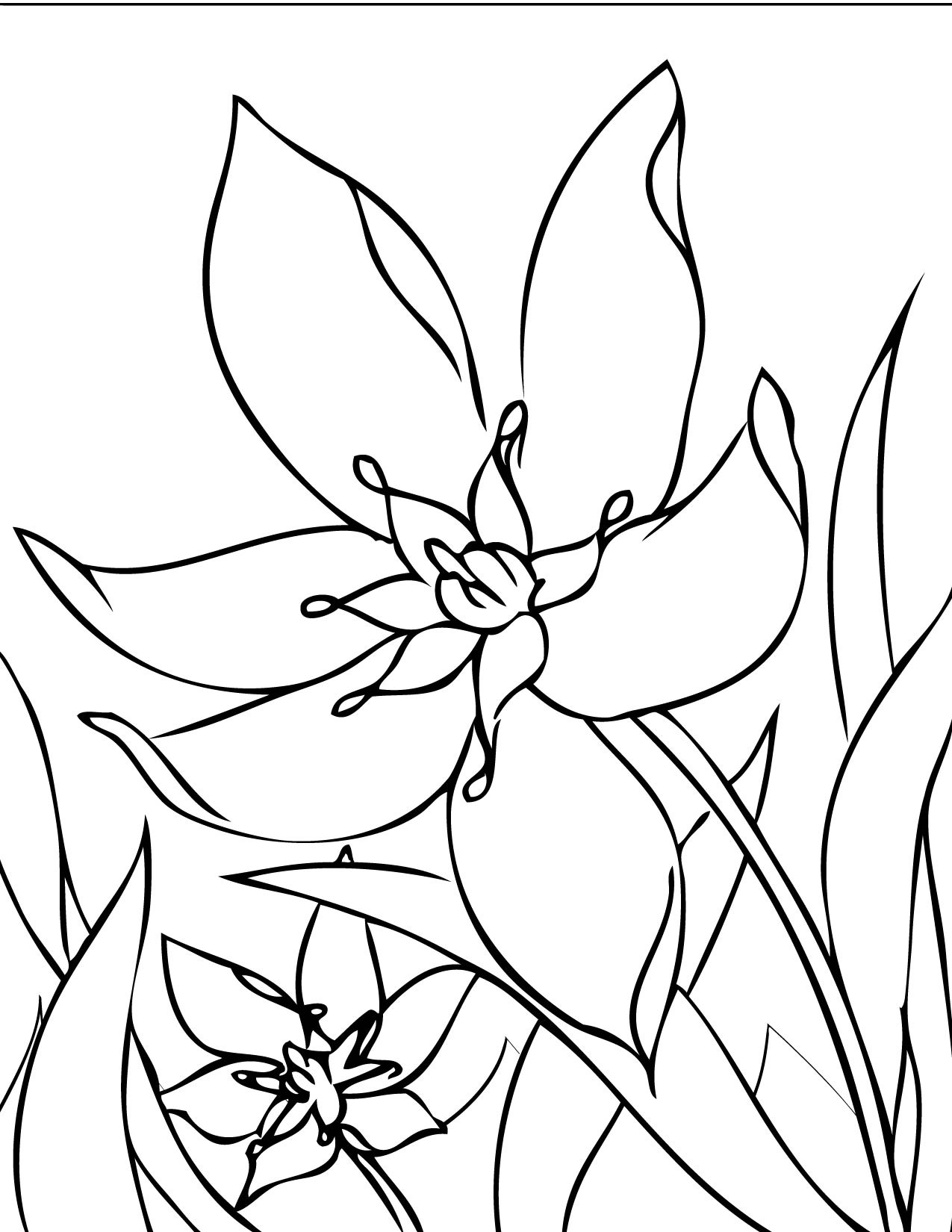 Free coloring pages spring flowers - Flowers Coloring Pages