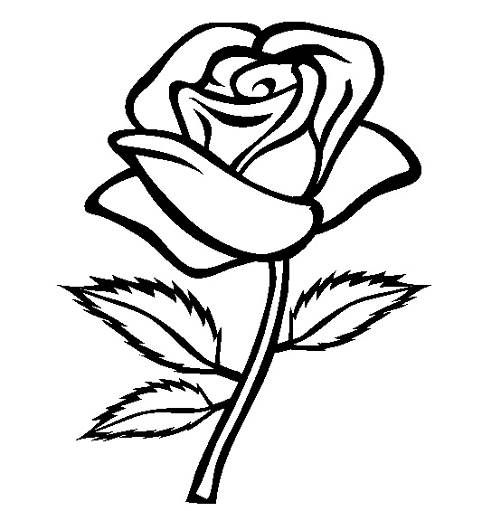 Realistic Rose Flower Coloring Pages