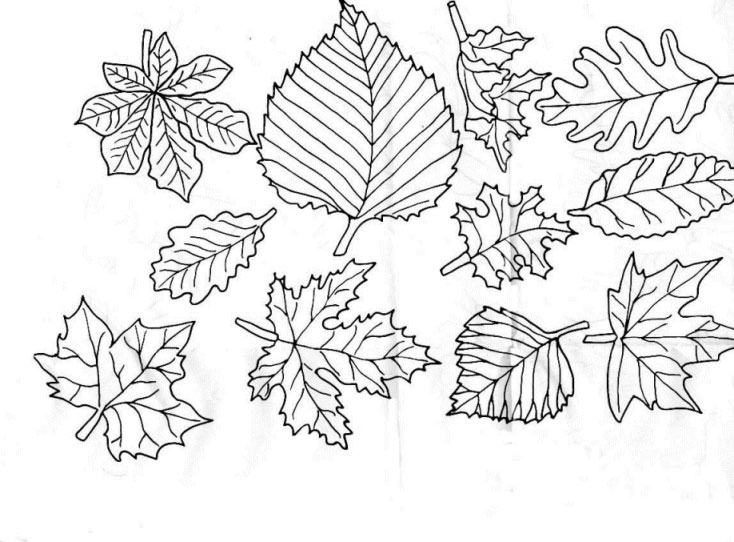 Leaves Coloring Pages Free