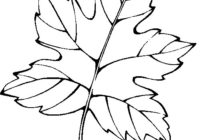 Spring Leaves Coloring Pages