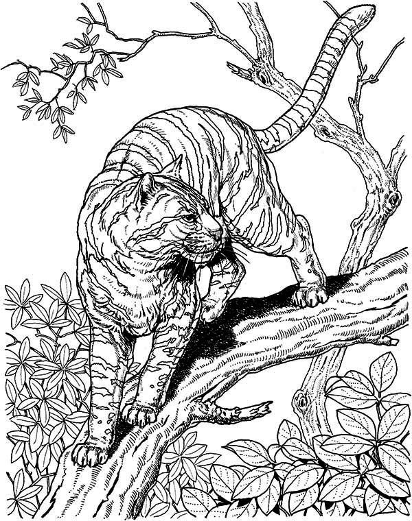 Tiger Coloring Pages For Adults