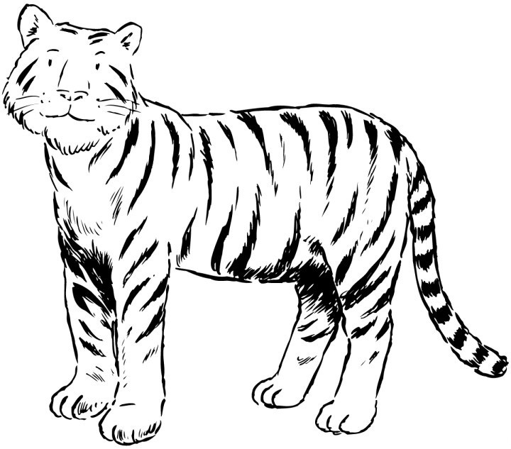 Tiger Coloring Pages Free Printable