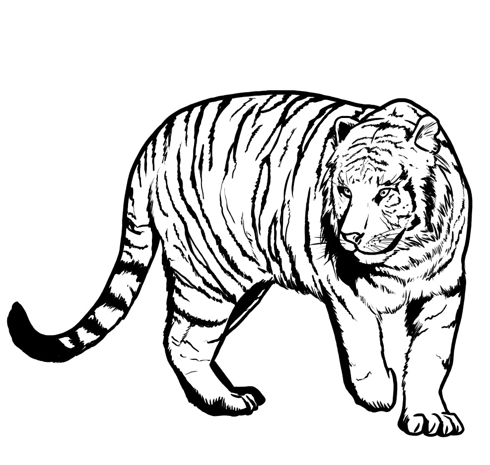 Tiger coloring pages for kids printable for Coloring pages of tiger