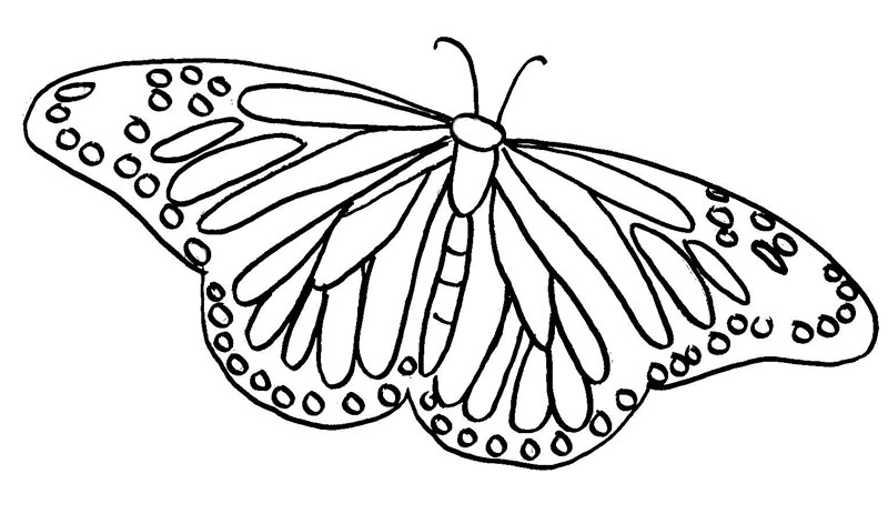 Butterfly Coloring Pages Free To Download