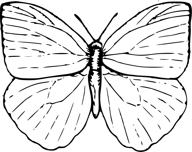 simple-butterfly-coloring-pages