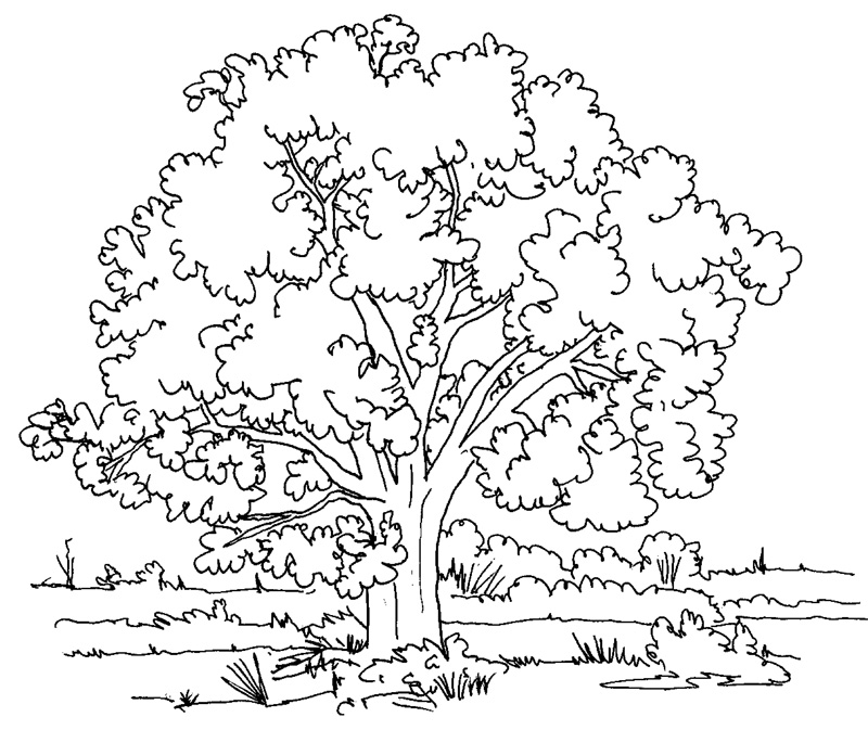 Nature Coloring Pages For Adults 4