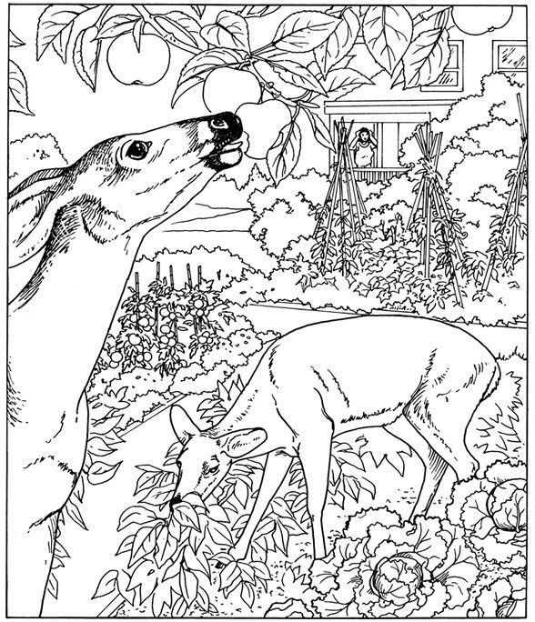 Printable Nature Coloring Pages For Adults