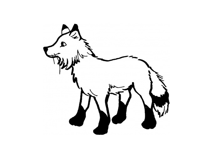 Arctic Fox Coloring Pages