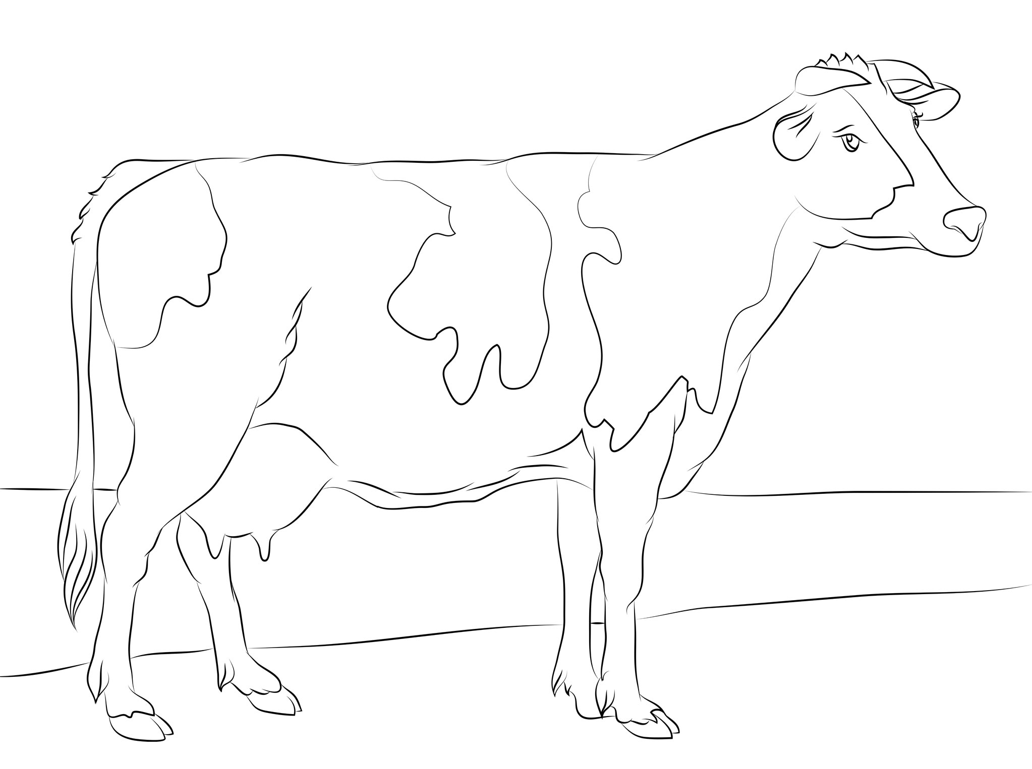 Cow Coloring Pages Free Download