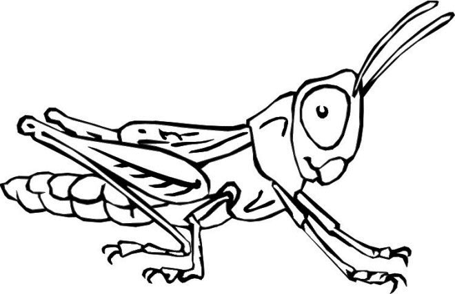Insect Coloring Pages Printable
