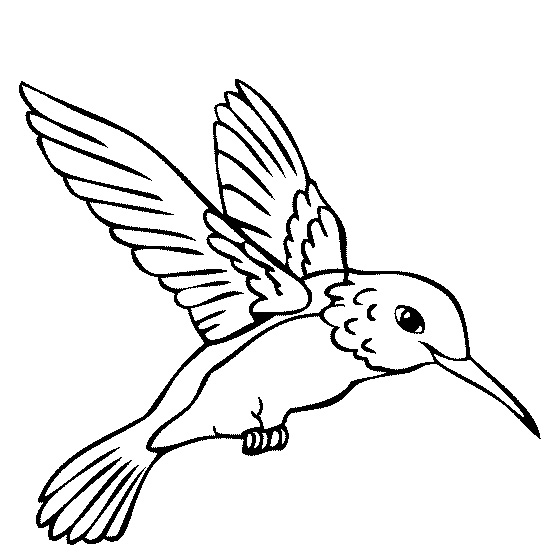 Jungle Birds Coloring Pages