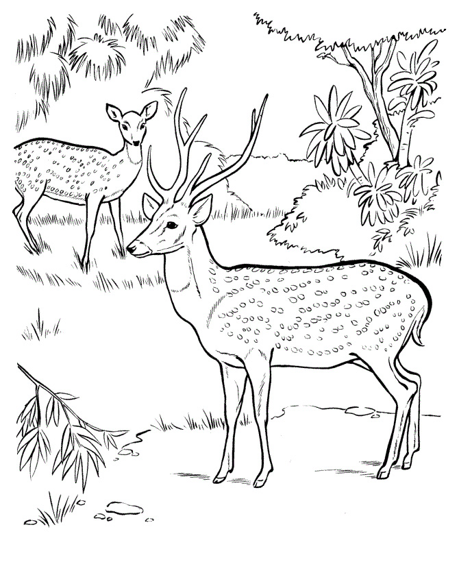 Jungle Coloring Pages Printable