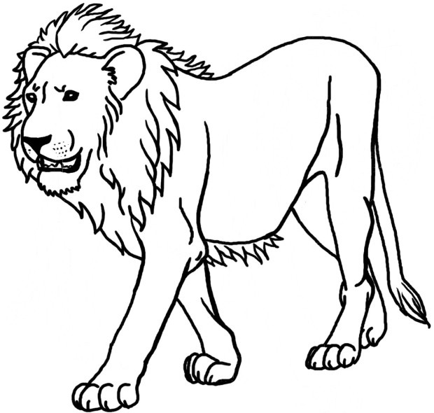 Lion Coloring Pages National Geographic