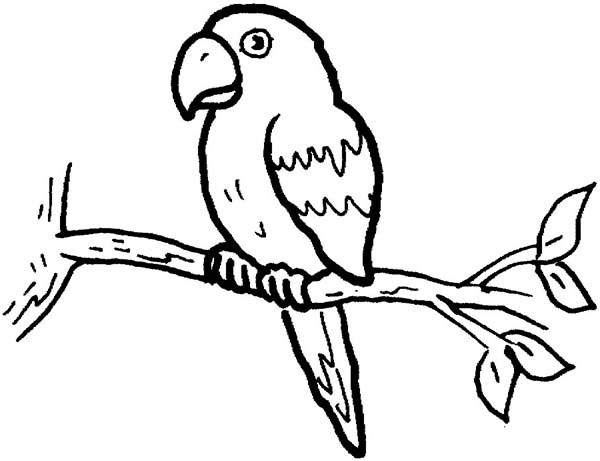 Parrot Coloring Pages For Adults