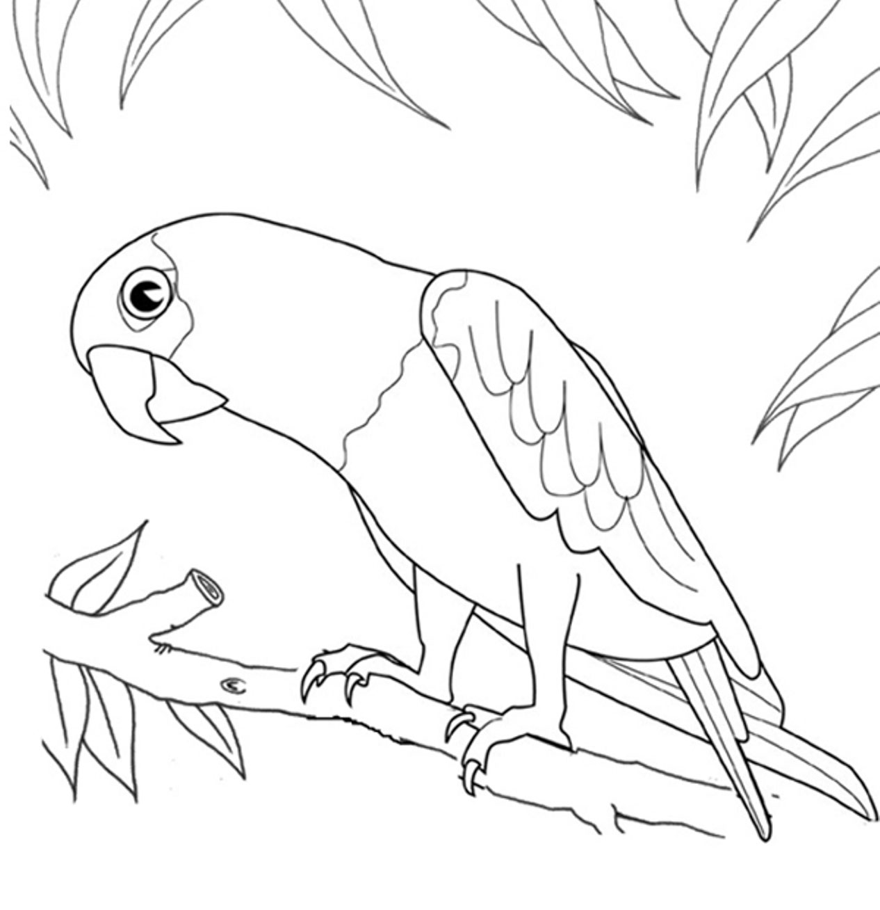 Parrot Coloring Pages To Print