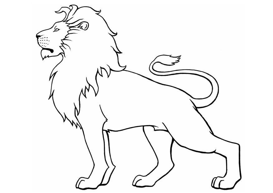 Realistic Lion Coloring Pages