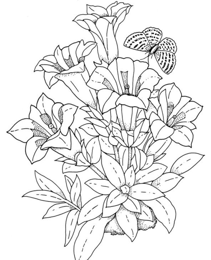 Flower Coloring Pages For Adults Download