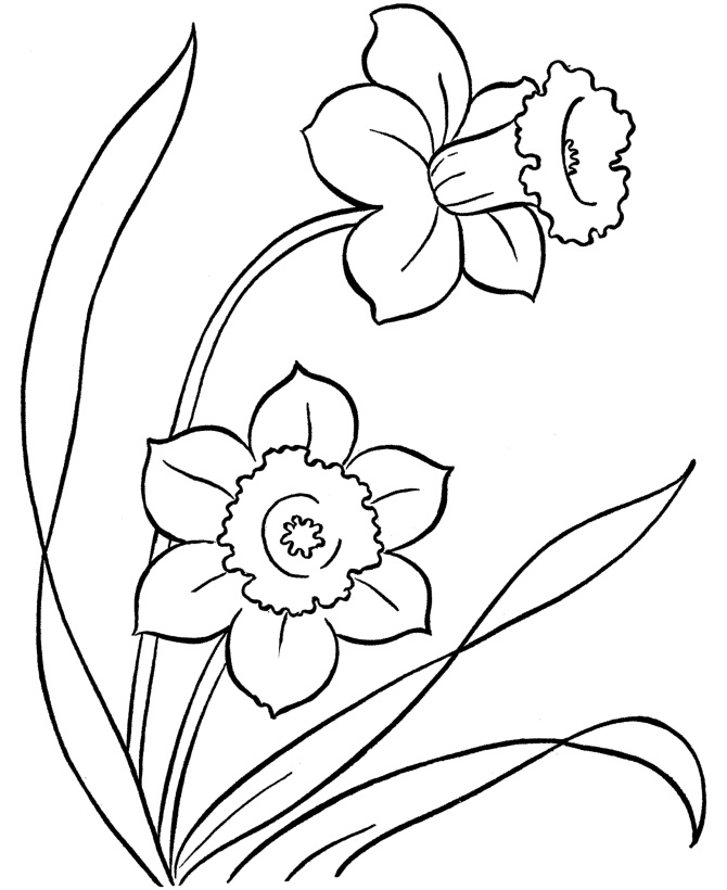 Flower Coloring Pages Free Printables