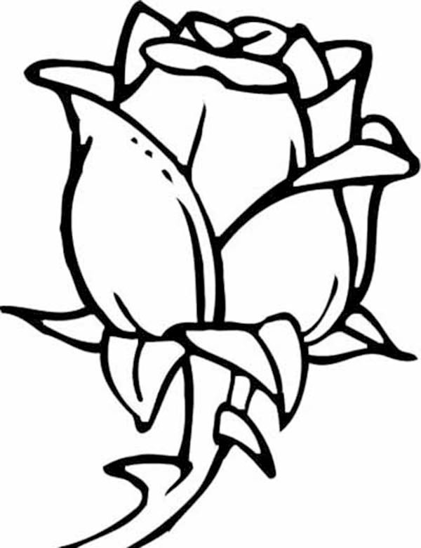 Flower Coloring Pages Rose