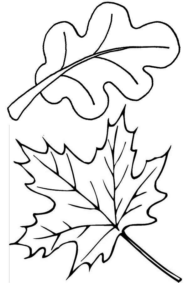 Maple and Oak Autumn Leaves Coloring Pages