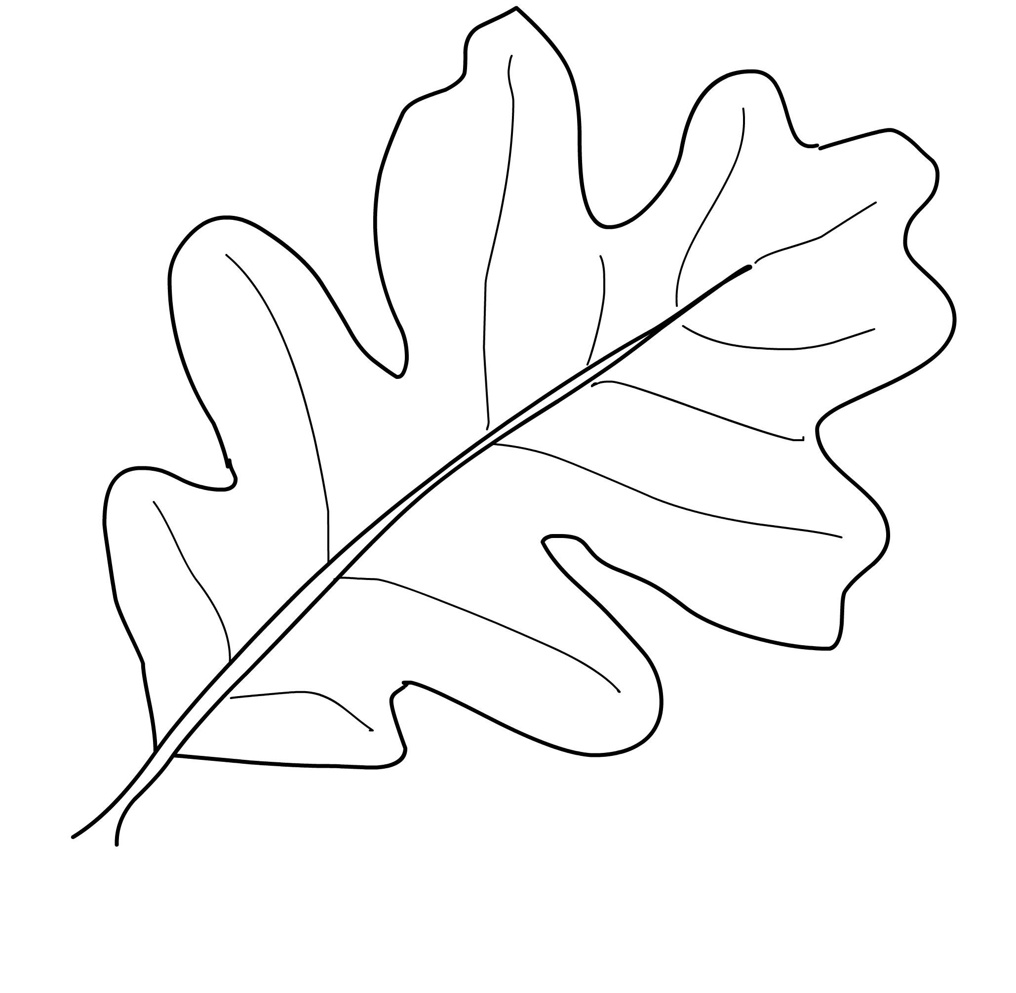 что картинка контур дубового листа рьяно ухаживают