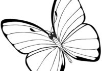 butterfly-coloring-pages